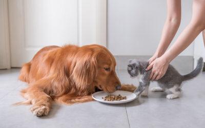 Petfood – Palatant